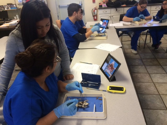 San Diego High School Frog Dissection Lab